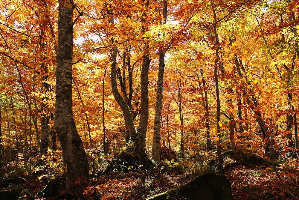 岳岱自然觀察教育林