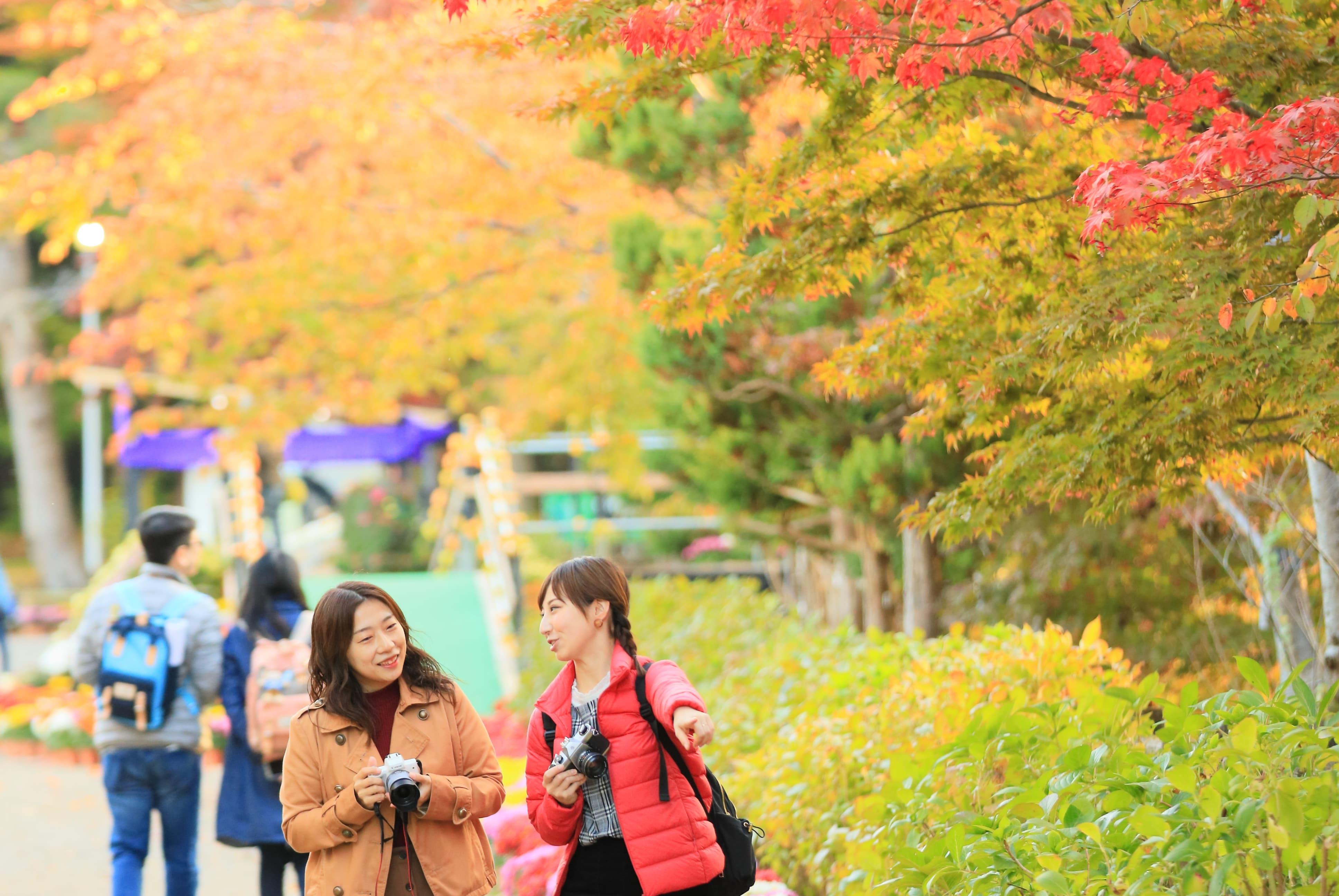 弘前城菊與紅葉祭